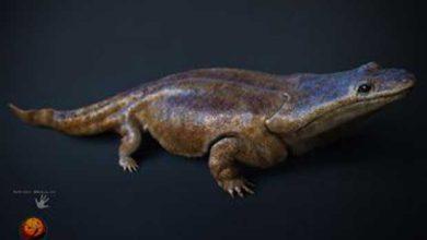 Photo de Des salamandres carnivores géantes hantaient la Terre à l'époque des premiers dinosaures