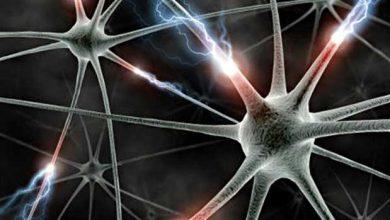 Réparation de cortex grâce à une greffe de neurones