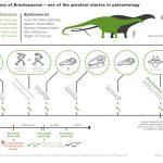 Les brontosaures ont bel et bien existé