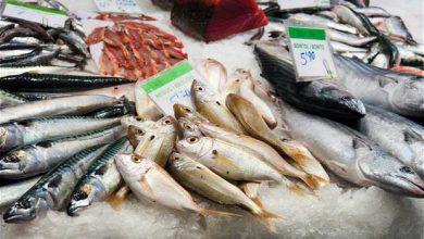Photo of Cancer : il faut éviter le poisson gras avant une chimiothérapie
