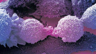 Photo of Découverte d'une protéine qui renforce le système immunitaire et « tue » tous les cancers
