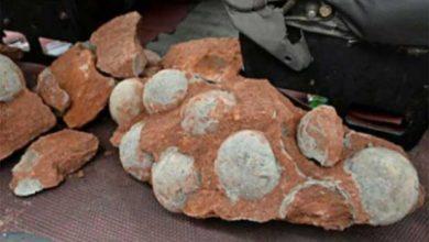 Photo de Découverte d'une quarantaine d'œufs de dinosaures