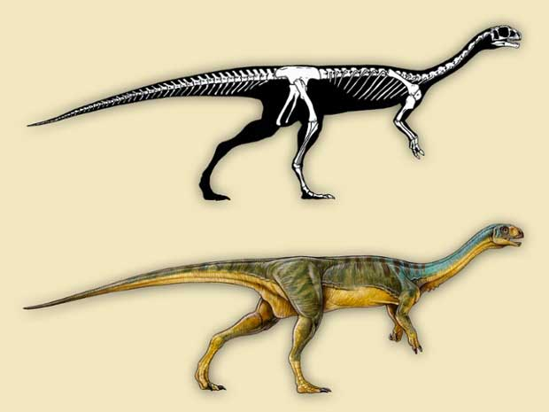 L'étrange anatomie du dinosaure Chilesaurus Diegosuarezi