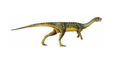 Photo de L'étrange anatomie du dinosaure Chilesaurus Diegosuarezi