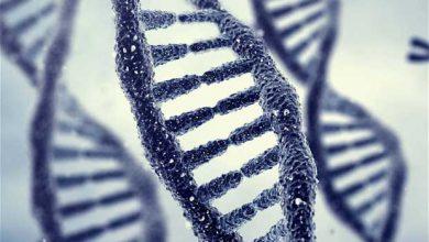 Photo of Génie génétique : la Chine choque le monde