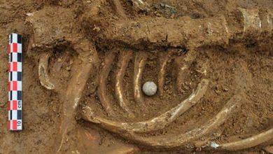 Photo de Le squelette de Waterloo livre son secret