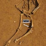 Le squelette de Waterloo livre son secret