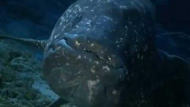 Photo de Un chercheur prouve que les poissons parlent entre eux