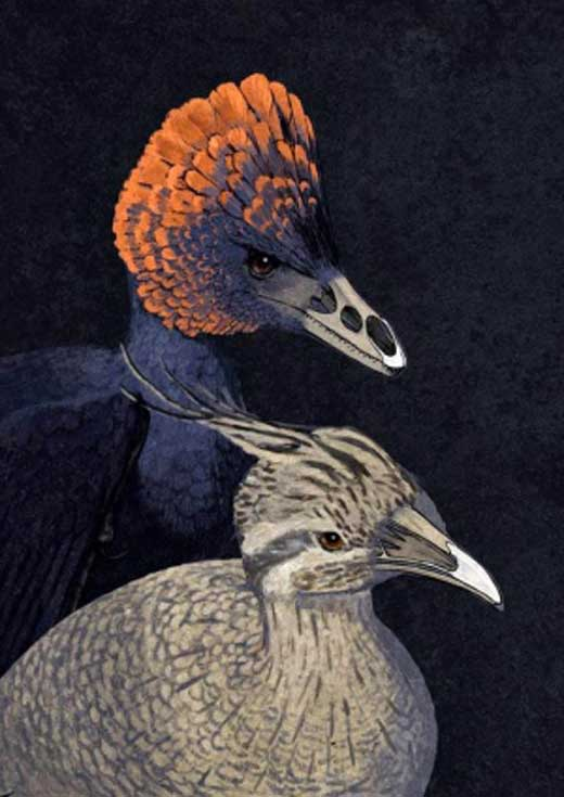 anchiornis-tinamou