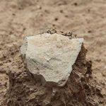 3,3 millions d'années : des outils plus vieux que le genre Homo