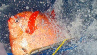 Photo of Poisson-lune : découverte du premier poisson à sang chaud