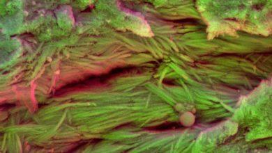 Photo de Analyser le sang des dinosaures pour percer un grand mystère