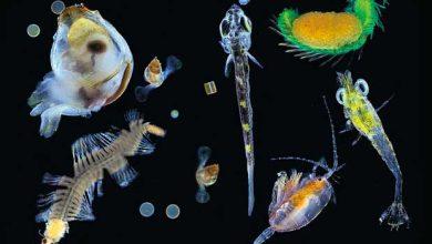 Photo of Réchauffement climatique : menaces sur la biodiversité marine