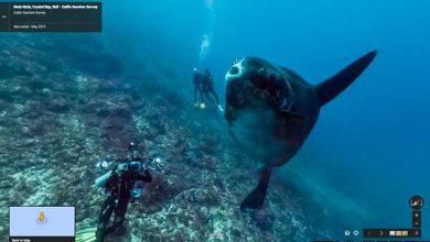 Photo of Street View : Google offre la visite de sites sous-marins