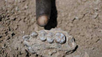 Éthiopie : Lucy n'est plus la seule australopithèque