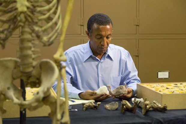 Vieux de 3,4 millions d'années, un australopithèque a été découvert en Éthiopie. Il vivait donc à la même époque que Lucy, considérée comme notre ancêtre direct.