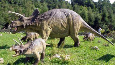 Photo de Wendicératops : un nouveau dinosaure de la famille des tricératops