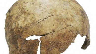 Des charniers qui révèlent des massacres collectifs en Europe à la préhistoire