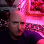 ISS : les astronautes vont manger une salade cultivée à bord de la station
