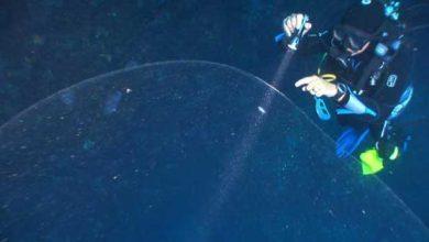 Le mystère de la boule gélatineuse découverte par des plongeurs