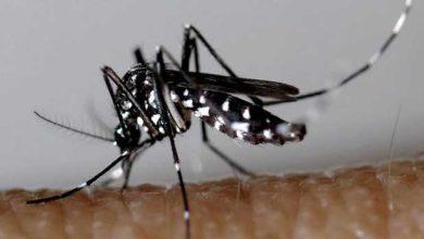 Schiltigheim : opération de démoustication contre le moustique tigre