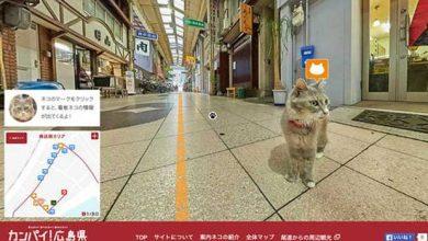 Photo of Cat Street View : voir le monde comme si on était un chat