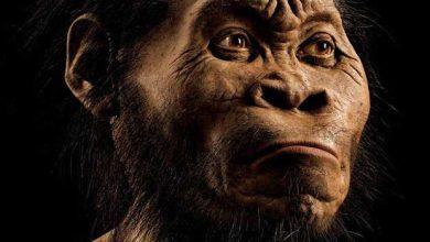 Photo de Homo naledi : découverte d'une nouvelle espèce du genre humain
