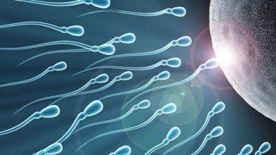 Des spermatozoïdes in vitro pour aider les hommes souffrant d'infertilité