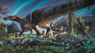 Photo de Un dinosaure herbivore vivait en Alaska il y a 69 millions d'années