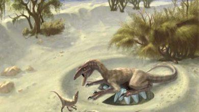 Photo de Une piste pour savoir si les dinosaures sont à sang chaud ou à sang froid