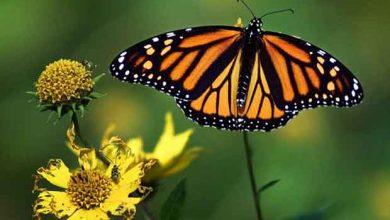 Photo de Les OGM sont naturellement présents dans la nature !