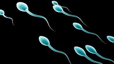 Photo de Les gros animaux devraient produire de gros spermatozoïdes : pourquoi ce n'est pas le cas ?