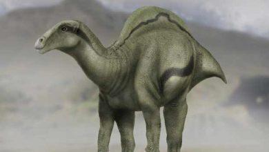 Photo de Un dinosaure inconnu, à voile dorsale, a été découvert en Espagne