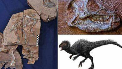 Photo de Dinosaure : les mystères de l'Heterodontosaurus apparaissent aux rayons X