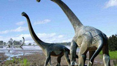 Photo de Découverte d'une espèce de dinosaure géant inconnue en Australie