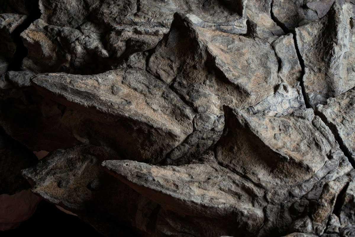 Le cou du nodosaure était recouvert de plaques d'armure épineuses plus prononcées que l'armure sur le reste de son corps.