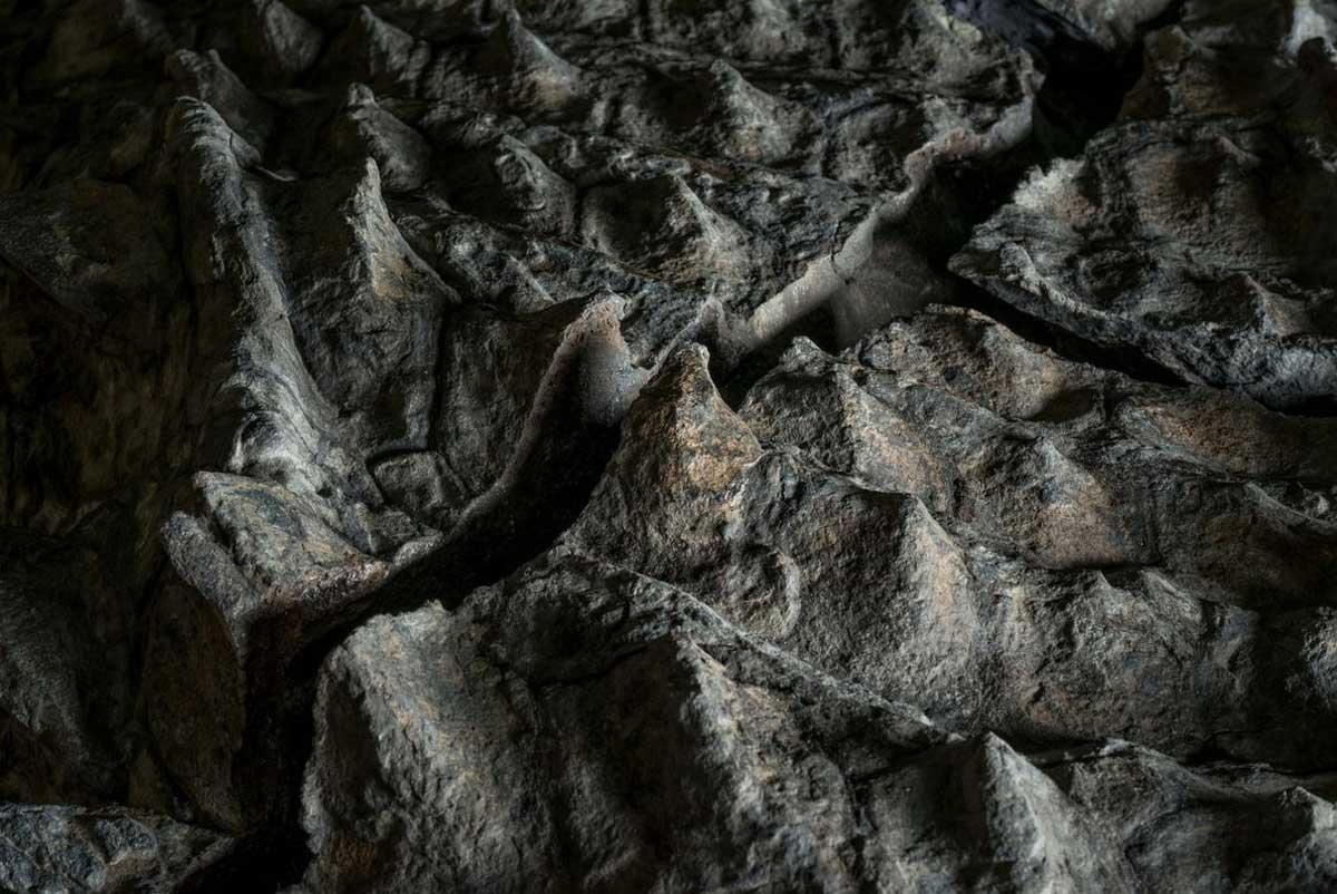 Pendant son enterrement en mer, le nodosaure s'est installé sur le dos, pressant le squelette du dinosaure dans l'armure et l'embossant avec les contours de quelques os. L'une des ondulations de l'armure trace l'omoplate droite de l'animal.