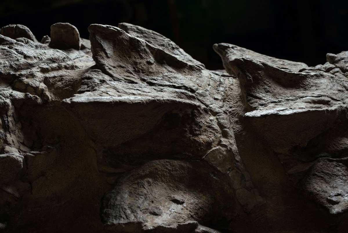 L'extraordinaire préservation du nodosaure a permis de capturer son blindage en 3-D, à peine écrasé par rapport à sa forme de vie.