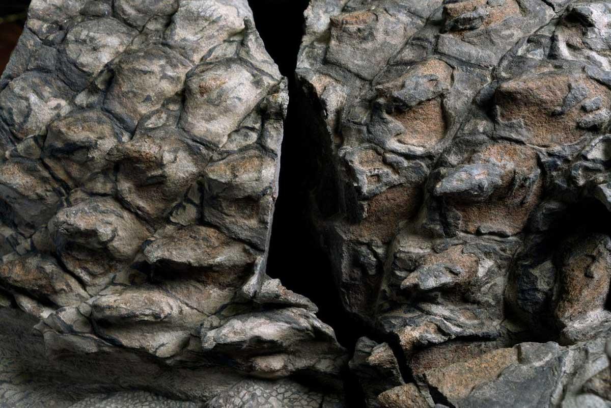 De nombreuses plaques de blindage du nodosaure, de couleur terre cuite, ont conservé des gaines qui étaient autrefois faites de kératine, le même matériau qui se trouve dans les ongles humains.