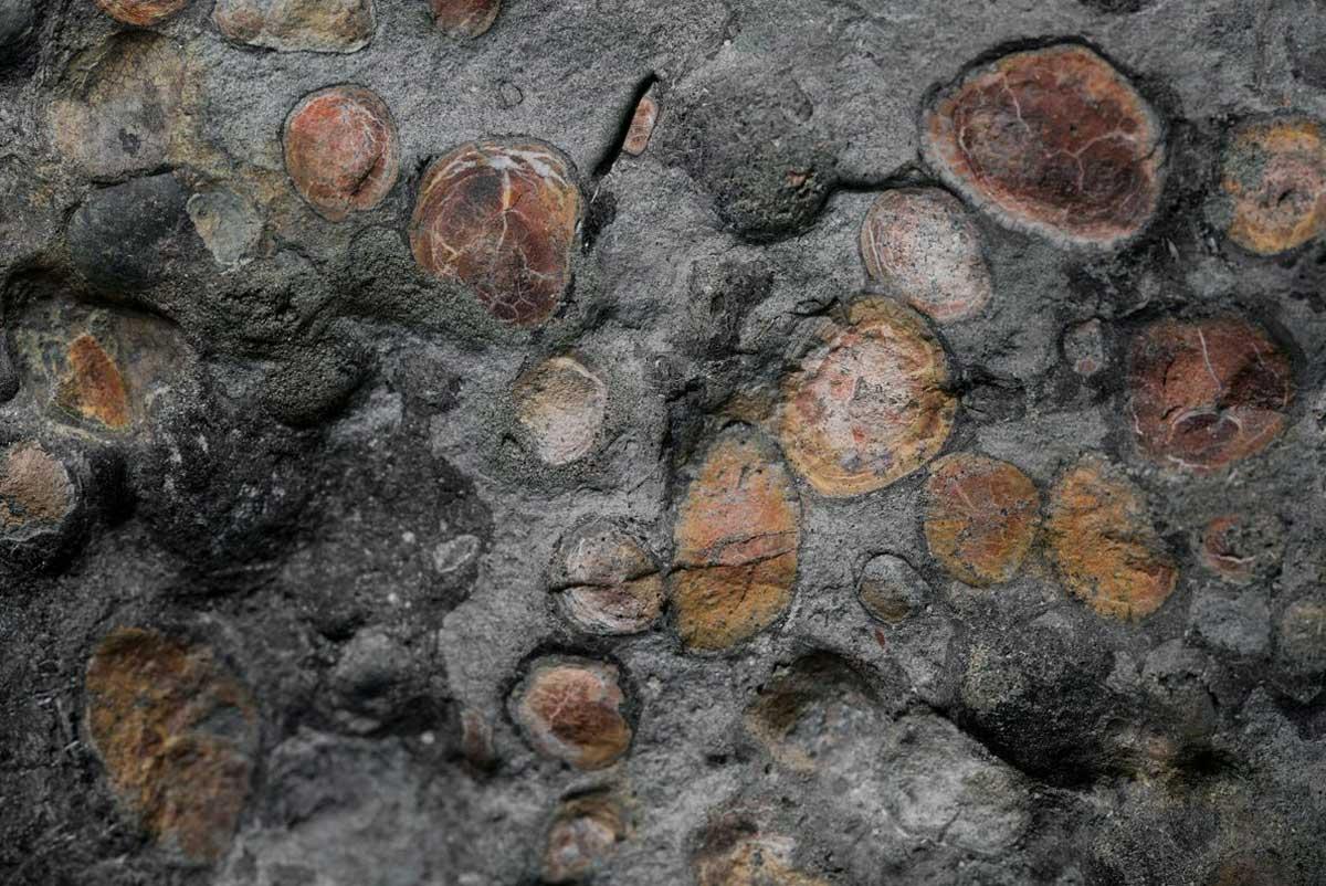 Un amas de masses ressemblant à des cailloux peut être un vestige du dernier repas du nodosaure.