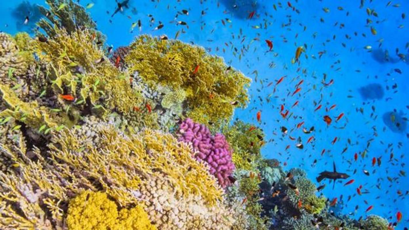 Les monts sous-marins abritent une grande biodiversité.