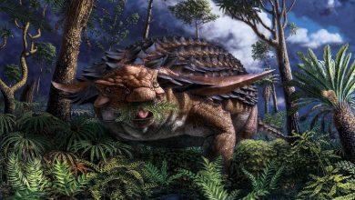 Photo de Le dernier repas d'un dinosaure en armure conservé dans un détail étonnant