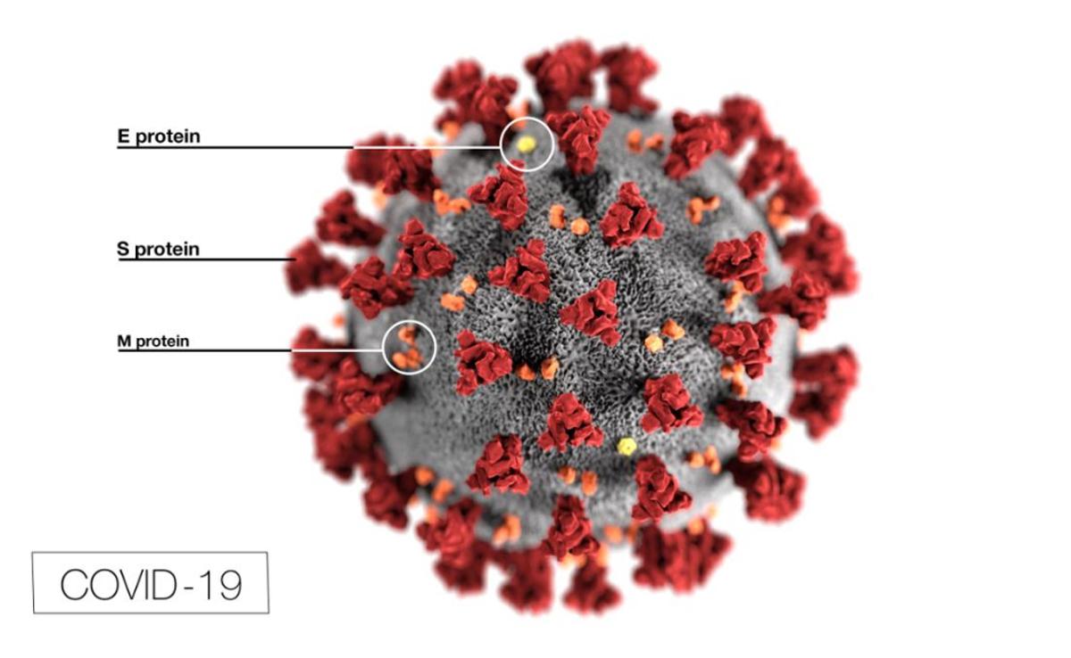 Une étude suggère que la mutation pourrait rendre le coronavirus plus infectieux