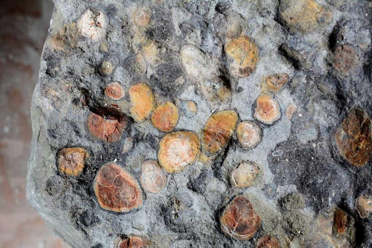 Le contenu des intestins du Boréalopelta comprenait des pierres que le dinosaure avait ingérées pour l'aider à décomposer sa nourriture.