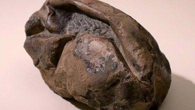 Photo de Le plus grand œuf de dinosaure est découvert en Antarctique