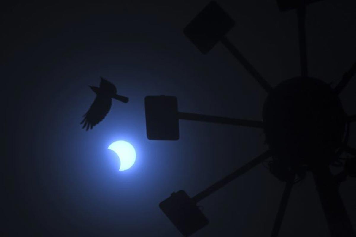 Un oiseau vole au passage de la lune qui se déplace devant le soleil pendant l'éclipse solaire annulaire de Chennai.