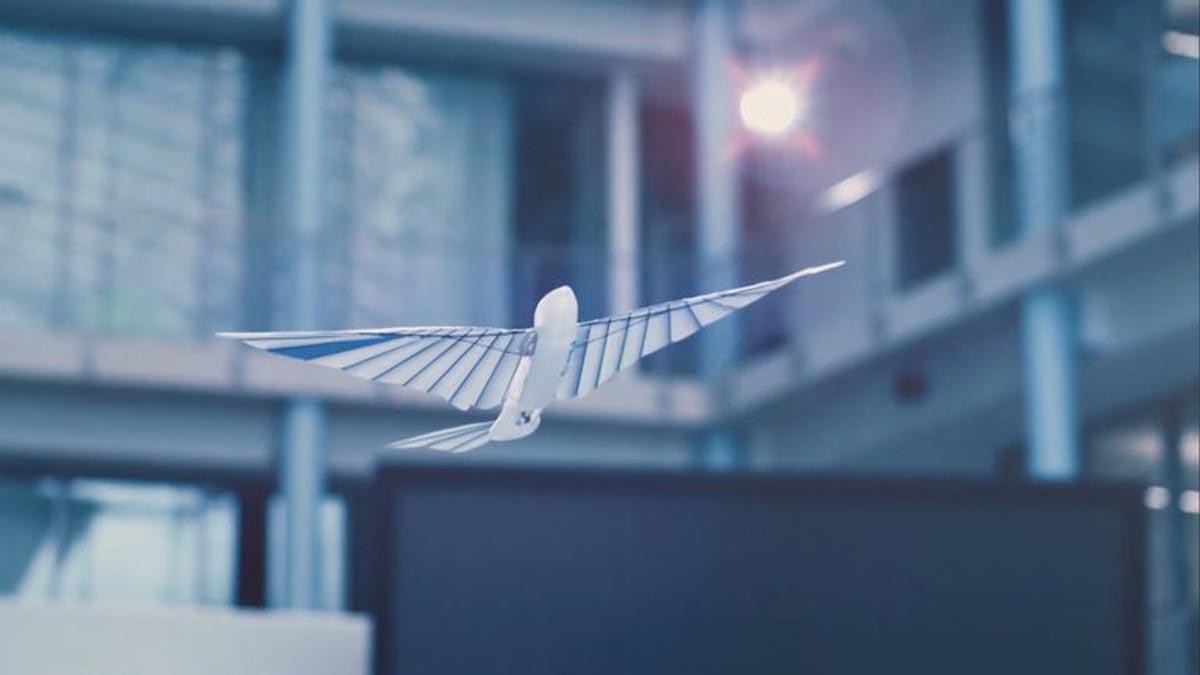 BionicSwift : un oiseau robot qui a l'air réel