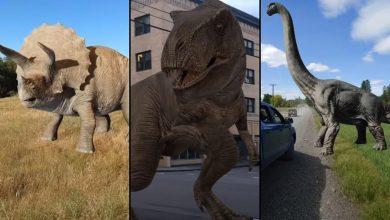 Photo de Comment trouver les dinosaures réalité augmentée sur Google