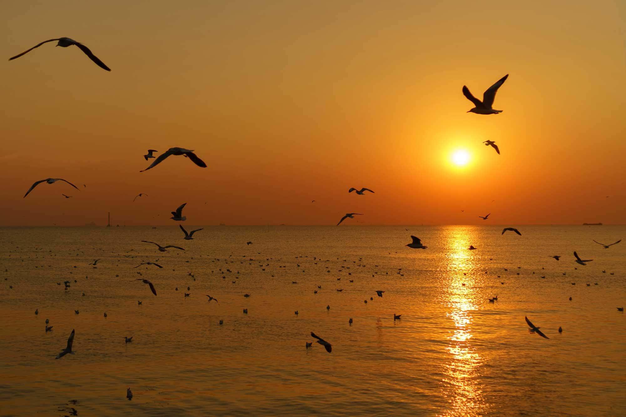 Groupe de mouettes silhouettes survolant la mer dans le ciel crépusculaire au coucher du soleil