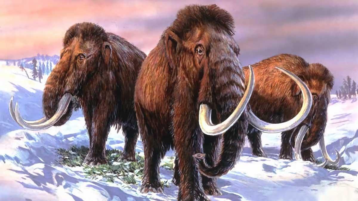 """""""Hybride éléphant-mammouth"""" : une entreprise de biosciences prétend ramener le mammouth laineux, aujourd'hui disparu."""